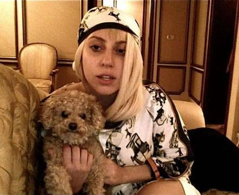 Lady Gaga Loves Dogs