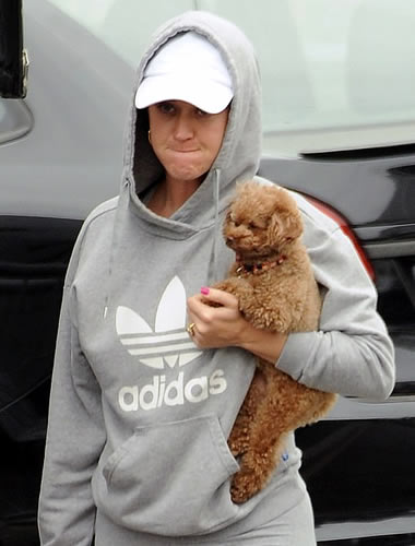 Katy Perry walking her poodle without makeup